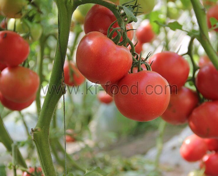 Tomato(AD)